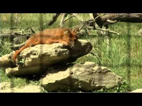 La r serve de la haute touche youtube for Zoo haute touche