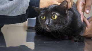 Kater sollte eingeschläfert werden, doch dann entdeckte der Tierarzt sein unglaubliches Talent!
