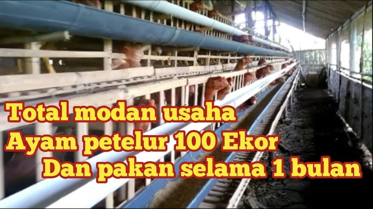 Get Cara Membuat Kandang Ayam Potong 100 Ekor Gif ...