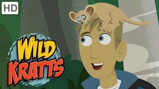 Wild Kratts 🌳 Explore Madagascar! | Kids Videos