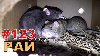 """#123. Реалити Шоу """"ALCARATZ"""". ДОМ 2 - Крысы. Рай"""