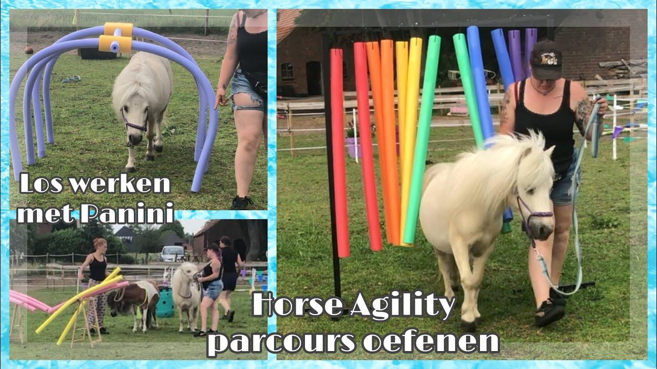 Horse Agility Parcours Oefenen & Los Werken Met Panini   Vlog #29   My Little Ponies