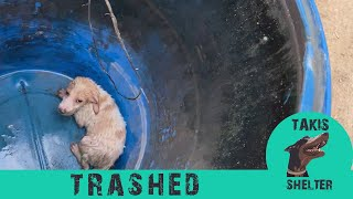 Puppy thrown in a barrel  Alpha  Takis Shelter