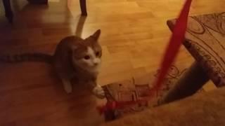 Мой кот Рыжий