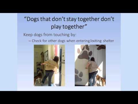 Dog Walking Training Video 3: Safety