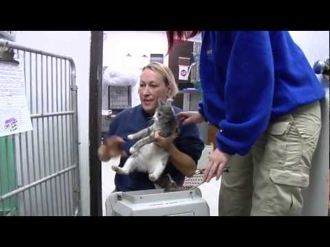 Animals Move To New Virginia Beach Shelter
