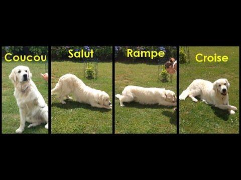 Collier Anti Aboiement Pour Petit Chien - 15 techniques à savoir - Les bases de l'éducation canine - Tuto