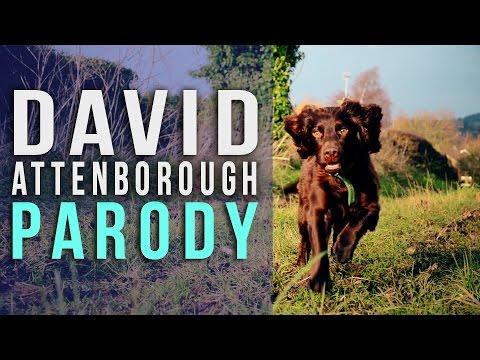 The Dog  David Attenborough Parody