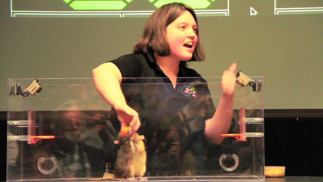 Live Science: Rat Basketball - YouTube - photo#15