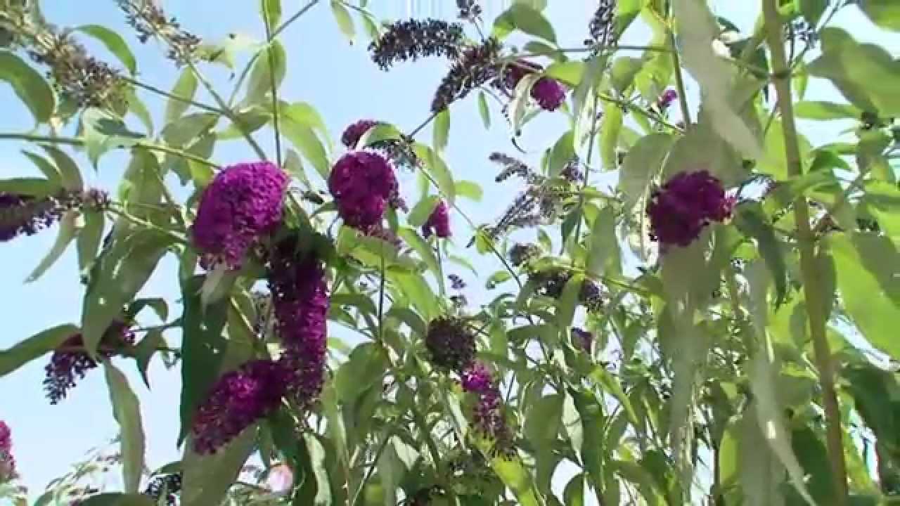 Mieux connaître les plantes invasives - YouTube