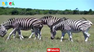 Learn Animal Names Giraffe Horse Lion Tiger Cow Elephant With Animals Toys for Kids F489C