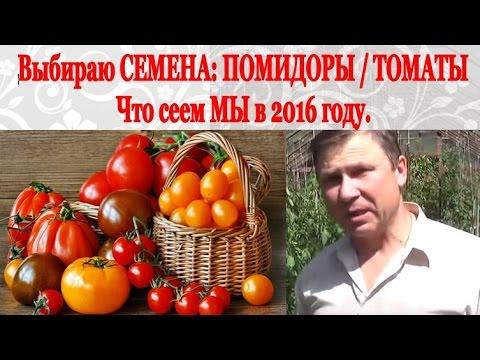 Необычные сорта томатов с узорчатыми и бархатными плодами