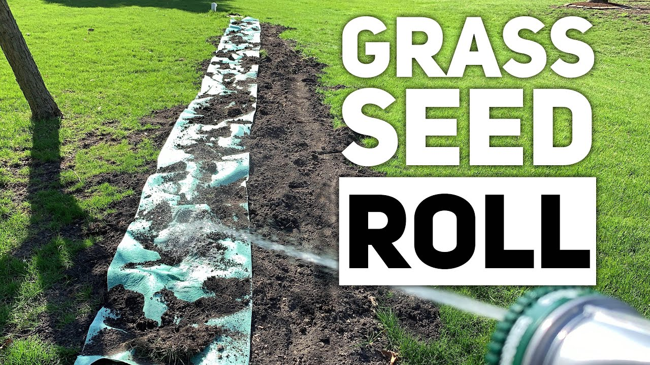 Grass Bare Grotrax Mat Roll For Spots Lawn Seed Review 0OXNkw8nPZ