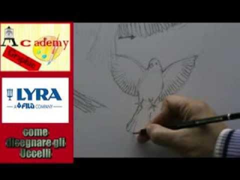 Come Disegnare Gli Uccelli