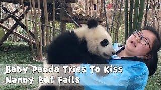 マスクとって~!飼育員メイさんにチューしようとする赤ちゃんパンダ