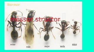 видео Какие бывают муравьи