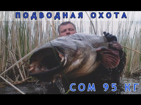Подводная охота на трофейного сома  95 кг