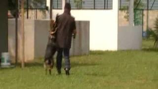 Kathargo Kennel - Ipo Schutzhund Training 4, Malaysia
