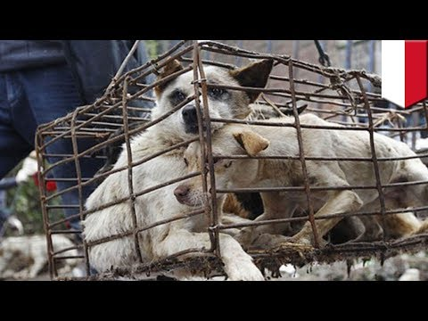 Dog meat being sold to unsuspecting tourists in Bali, Indonesia - TomoNews