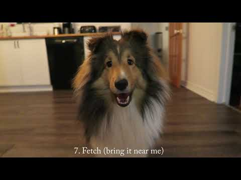 Novice dog tricks ATLAS | Do More with Your Dog NTD | My sheltie pack