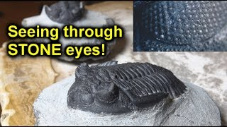 Trilobites: the creature that looked on the world through STONE eyes!