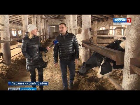 Государственный грант в 3 миллиона рублей: ферма братьев Соколовых из Марий Эл процветает