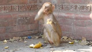 Baby Monkey Swats Fly