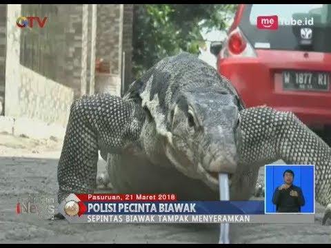 Wow!! Polisi di Pasuruan Pelihara Biawak yang Tampak Menyeramkan Hingga Jinak - BIS 22/03