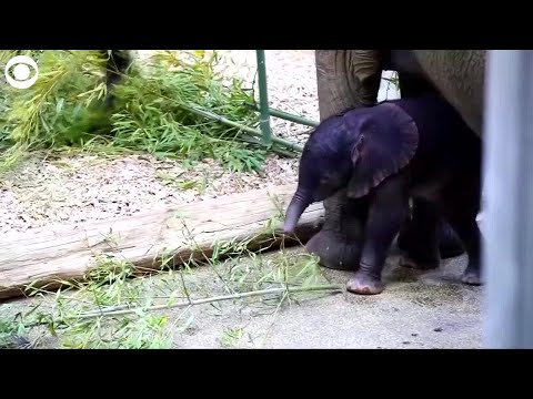 web-extra:-meet-this-baby-elephant