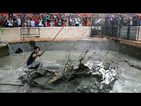 BUAYA BESAR DI KBS (kebun binatang surabaya)/action time