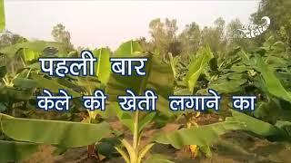 केले की खेती देखनी है चलिए बाराबंकी जिले के भुल्भुलिया गांव में