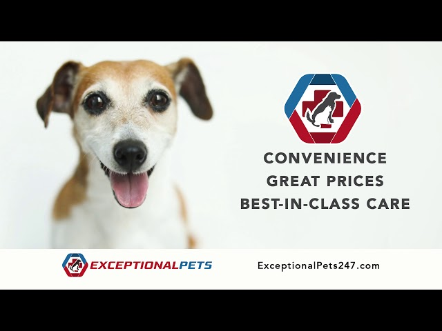 Exceptional Pets Salon Services