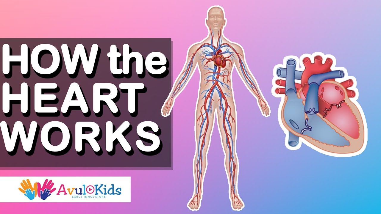 How Heart Works Human Body Science For Kids Educational Videos
