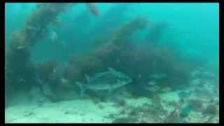 Spearfishing Fiordland NZ May 2013