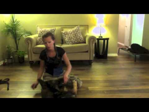 how to prepare rollover dog roll