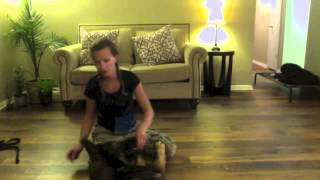How To Teach Your Dog To Roll Over By Valor K9 Academy