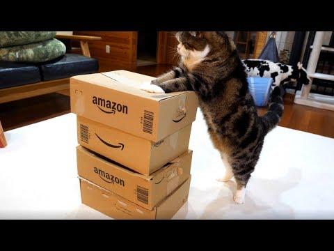 積み重なった箱とねこ。-Piled boxes and Maru.-