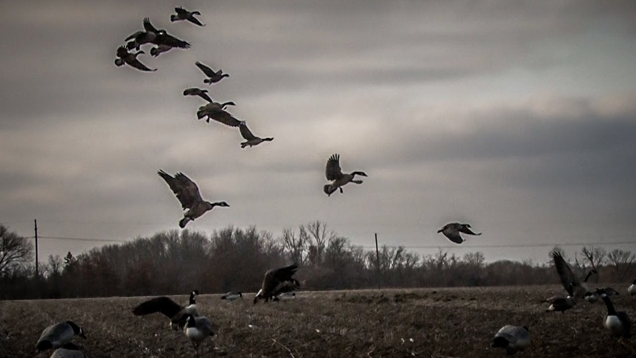 Waterfowl Hunting: Lon...