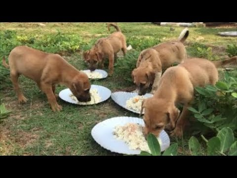 Cooking For My Dogs And Puppies - Healthy Food For Dogs And Puppies