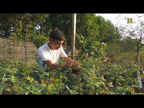 Chàng trai sở hữu 100 giống hoa hồng quý hiếm ở Hà Nội