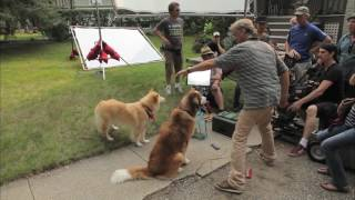 A Dog's Purpose | A Dog's Purpose | Bonus Clip | Own It Now On Blu-ray, DVD & Digital