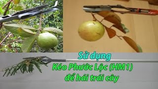 Video Dùng kéo Phước Lộc (HM1) để hái trái cây | Dungcunongnghiep.vn | 0888 542 612 download MP3, 3GP, MP4, WEBM, AVI, FLV November 2018