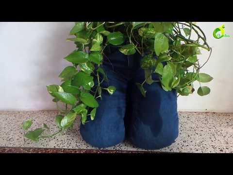 how to reuse old jeans for garden /money plant/pothos/money plant decoration /organic garden