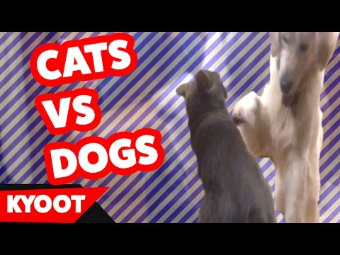 Funniest Cute Dog vs Cute Cat Home Videos of 2016 Weekly Compilation | Kyoot Animals