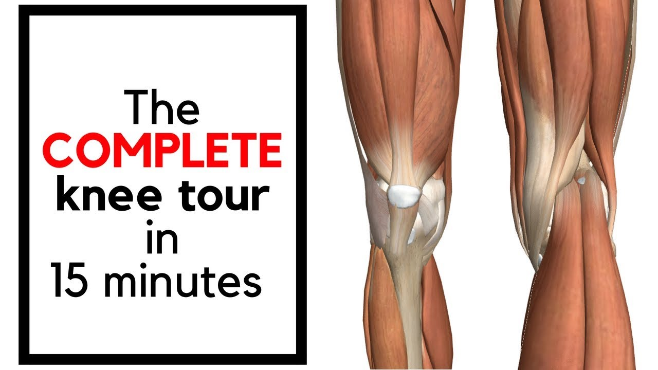 Knee Anatomy In 15 Minutes Knee  Joint  Meniscus  Hamstrings  Tendon  Lcl  Pcl  Mcl  Acl