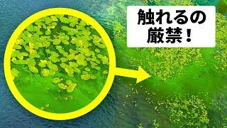 緑の泡を見たら逃げ出せ?!危険な海の生物集