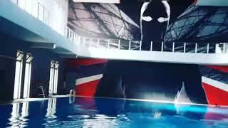 Personal Swimming trainer  in Riyadh 0555833800