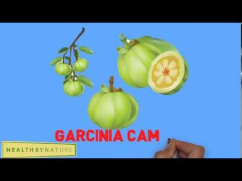 Garcinia Cambogia Extract for Weight Loss Diet Pills Fat Burner (Lipovida)