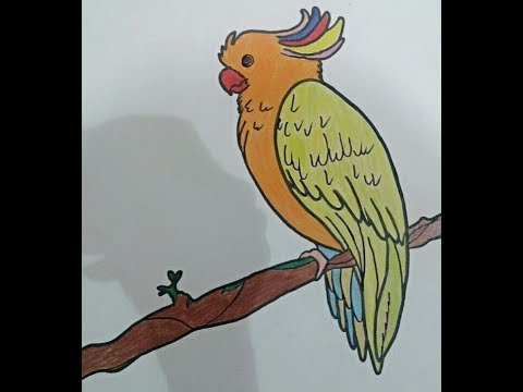 Coloring A Beautiful Parrot