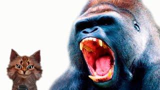 Горилла | Наука для школьников Животные | Кот Семен Ученый